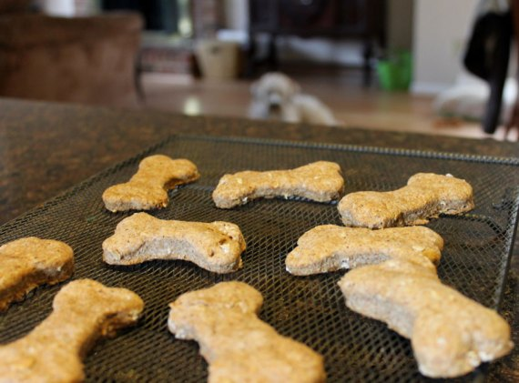 Dog treat kit